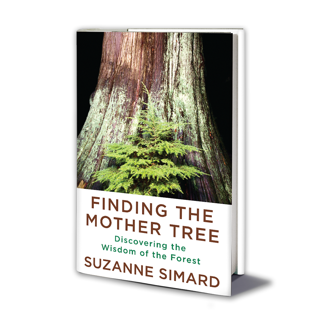 Cover of 'Finding the Mother Tree' book