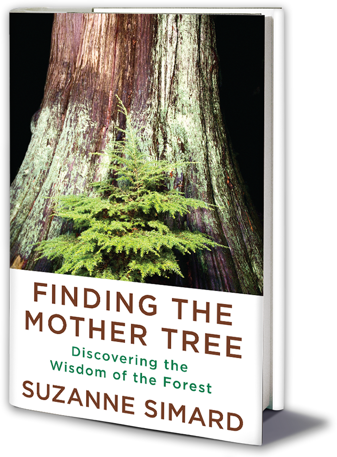 Book Cover - Finding the Mother Tree by Suzanne Simard